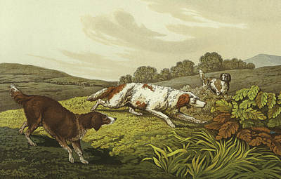 Dog Drawing - Setters by Henry Thomas Alken