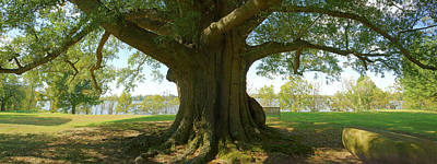 River Scenes Digital Art - Shade Tree 2 Panoramic by Mike McGlothlen