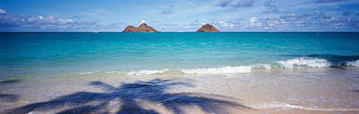 Shadow Of A Tree On The Beach, Lanikai Print by Panoramic Images