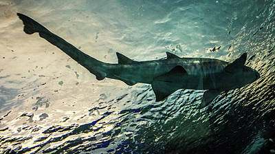Bite Photograph - Shark Fins by Martin Newman