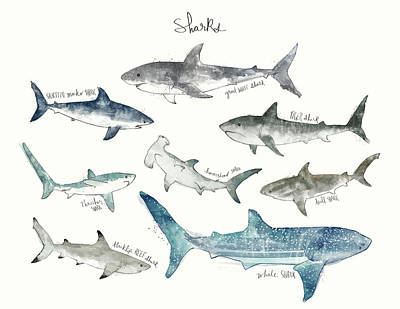Bull Mixed Media - Sharks - Landscape Format by Amy Hamilton