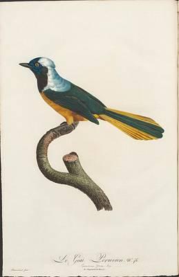 Peruvian Painting - Sharpes Birds Of Paradise by Jay Peruvian