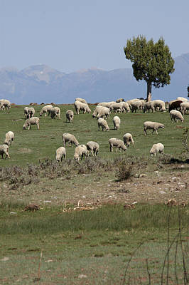 Farm Photograph - Sheep Country by Jerry McElroy