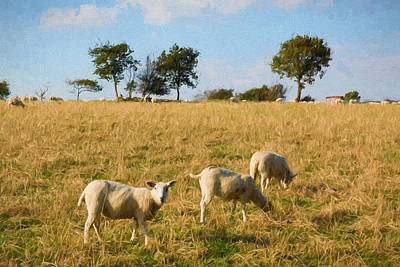 Blagdon Photograph - Sheep In A Field Blackdown Hills East Devon England Uk Countryside View Illustration by Michael Charles