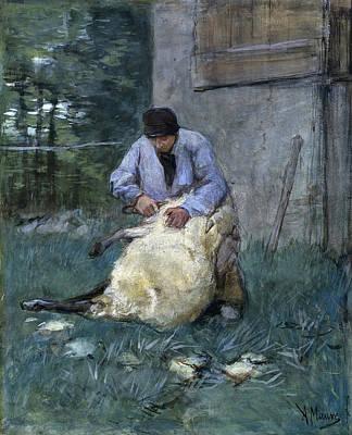 Anton Mauve Drawing - Sheep Shearer by Anton Mauve