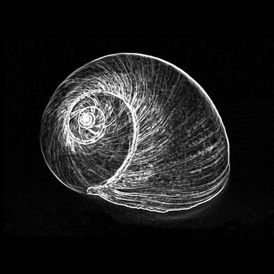 Seashell Photograph - Shell 3 - White On Black by Carole Lloyd