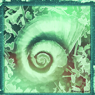 Primitives Photograph - Shell Series 2 by Marvin Spates