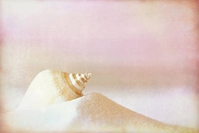 Ocean Photograph - Shell Study No. 03 by Pictorial Decor