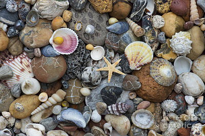 Shells And Pebbles Print by Tim Gainey