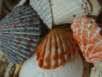 Shells Original by Juergen Roth