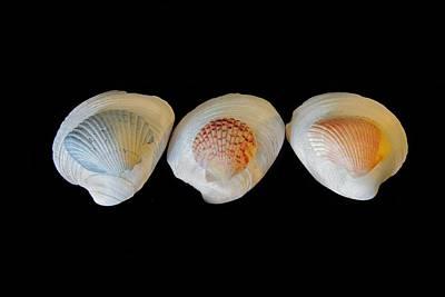 Shells Photograph - Shells On Black Background by Angela Murdock