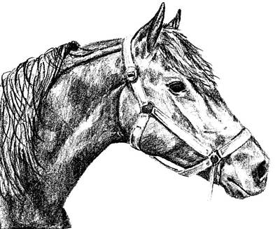 Textured Horse Art Drawing - Sherman by JAMART Photography
