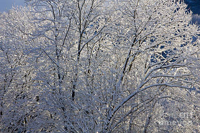 Blue Photograph - Shining With Snow by Sverre Andreas Fekjan