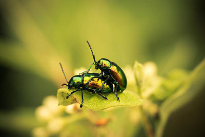 Beetle Photograph - Shiny Pair by Shane Holsclaw