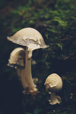 Mushroom Photograph - Shroom Family by Shane Holsclaw