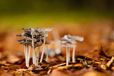 Virginia Photograph - Shroomy World by Shane Holsclaw