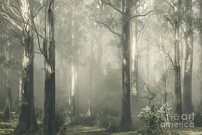 Photograph - Shroud by Andrew Paranavitana