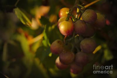 Shy Grapes Print by Angelo DeVal