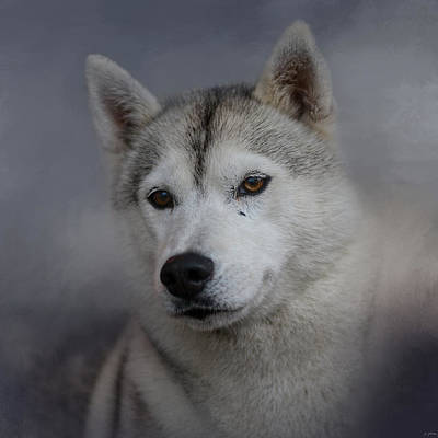 Siberian Husky Print by Jai Johnson