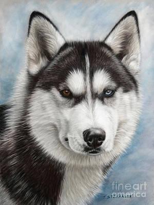 Dog Art Drawing - Siberian Husky by Tobiasz Stefaniak