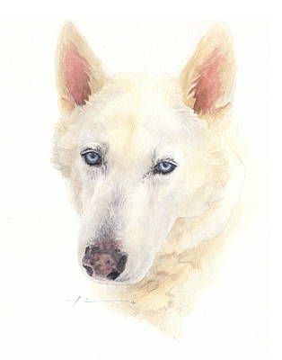 Siberian Husky Drawing - Siberian Husky Watercolor Portrait by Mike Theuer