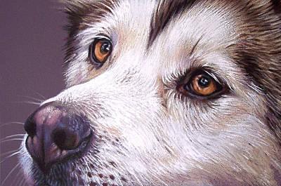 Siberian Husky Drawing - Siberian Husky by Elena Kolotusha