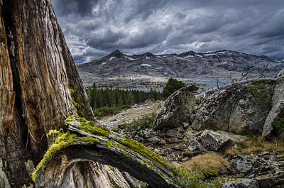 Sierra Juniper And Lake Aloha Print by Howie Garber