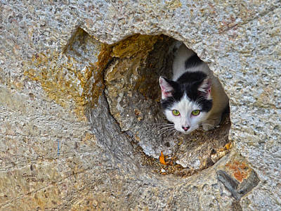 Sifter The Cat Inside Old Millstone Print by Sandi OReilly