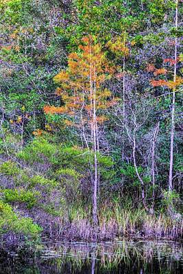 Signs Of Fall In Florida Print by JC Findley