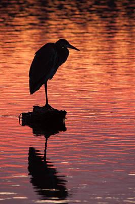 Silhouette Of A Heron Print by Matt Dobson