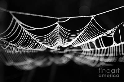 Spiderweb Photograph - Silk River by Jan Piller