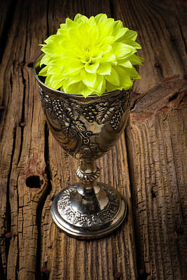 Knotholes Photograph - Silver Cup And Dahlia by Garry Gay