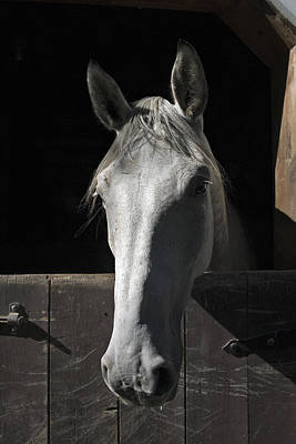 Horses Digital Art - Silver by Jack Goldberg