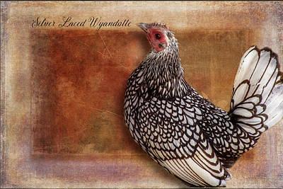 Breed Digital Art - Silver Laced Wyandotte by Terry Davis