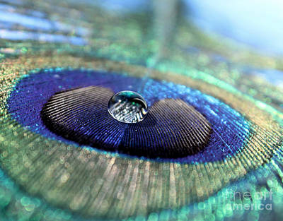 Peacock Photograph - Silver Lining by Krissy Katsimbras