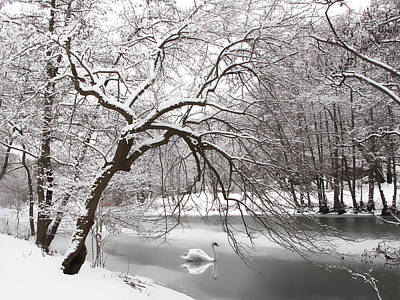 Winter Trees Digital Art - Silver Swan by Jessica Jenney