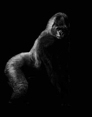 Gorilla Drawing - Silverback by Heather Ward