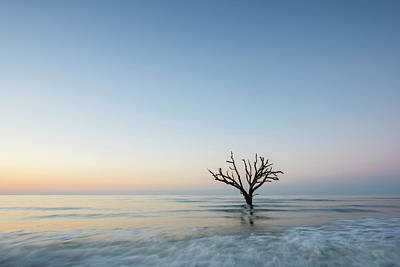 Edisto Photograph - Simple Tree by Jon Glaser
