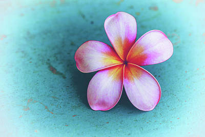 Floral Photograph - Simplicity by Jade Moon