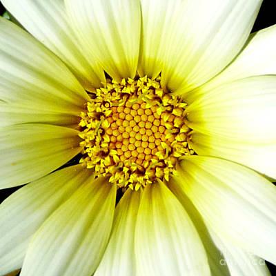 Simply Daisy Print by JoAnn SkyWatcher