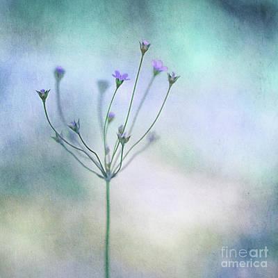 Blue Flowers Photograph - Simply Flowers by Priska Wettstein