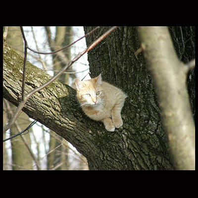 Cat Photograph - Sinbad by John Shook