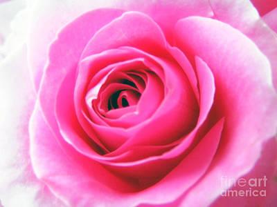 Rose Photograph - Single Pink Rose by Nina Ficur Feenan