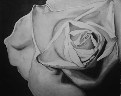 Pictur Drawing - Single Rose by Jason Dunning