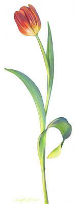 Single Tall Tulip Original by Sandy Haight