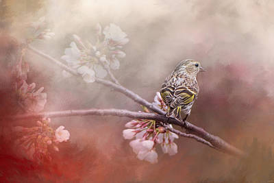Siskin Photograph - Siskin In The Garden by Jai Johnson