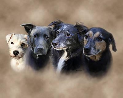 Pet Portraits Digital Art - Sis's Buddies by Barbara Hymer