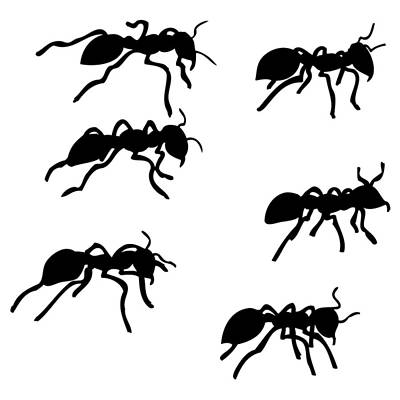 Ant Drawing - Six Ants by Karl Addison