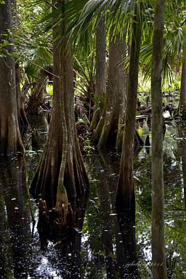 Cypress Stump Photograph - Six Mile Cypress Swamp Florida by Joseph G Holland