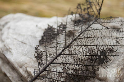 Tree Photograph - Skeleton by Carolyn Brown